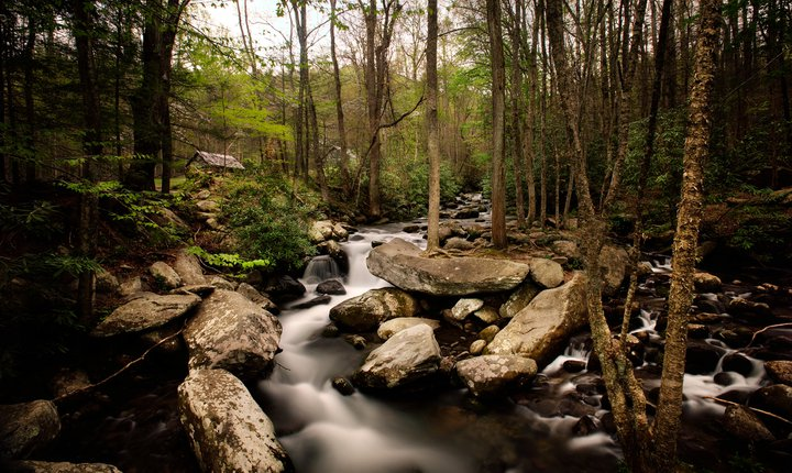 Roaring Fork Motor Nature Trail Sevier County Gatlinburg
